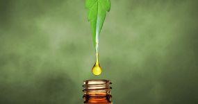 CBD olej a jeho účinky